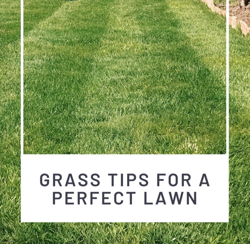 THE SECRETS TO A GREENER GLOSSIER LAWN // GRASS TIPS